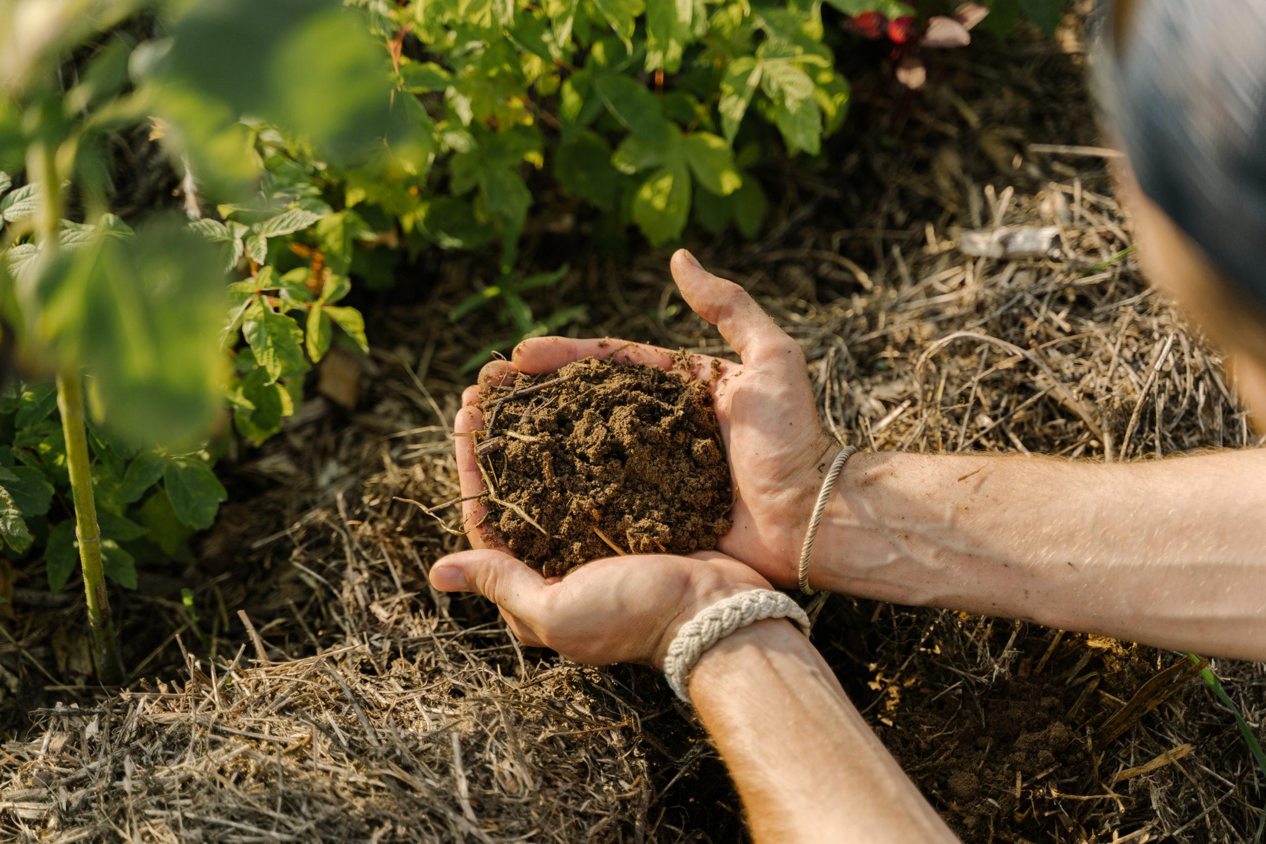 Living Soil Journey Hände mit Boden